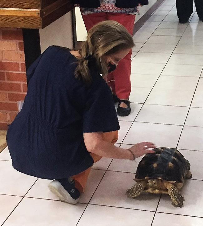 Turtle-1-2